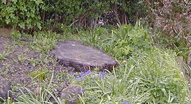 Tree stump in a flower border to be removed by Stumps Away.